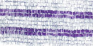 TWO ROW WAMPUM: A historical treaty with relevance today